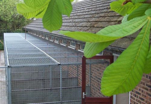 kennels in warrington